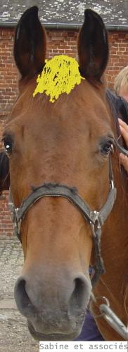 chevalblond.jpg