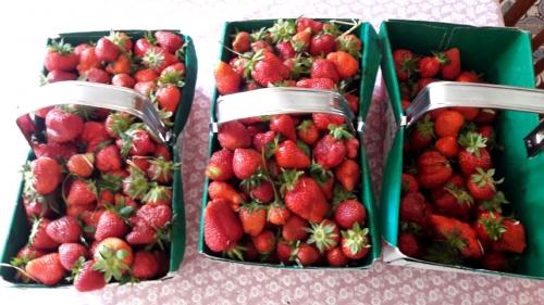 panier-fraise.jpg